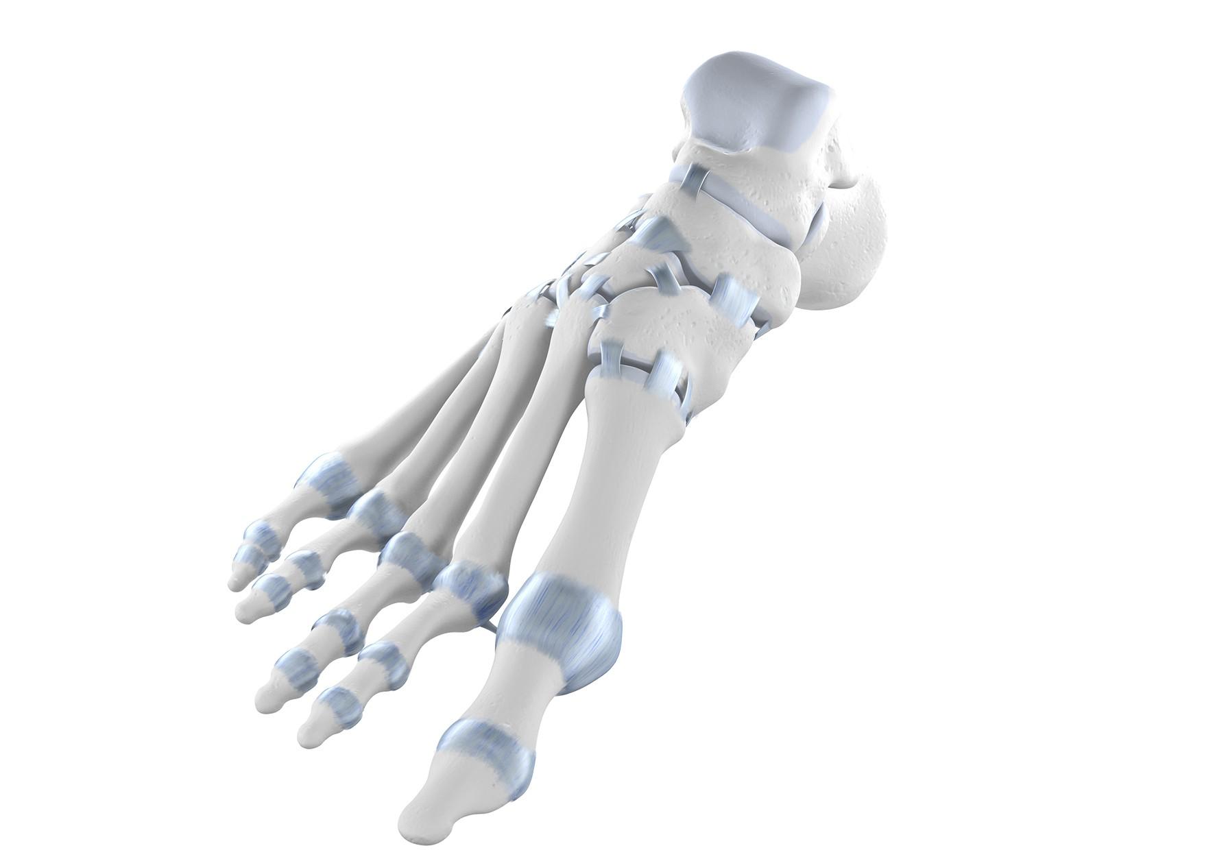 Ausgezeichnet Linker Fuß Anatomie Knochen Ideen - Menschliche ...